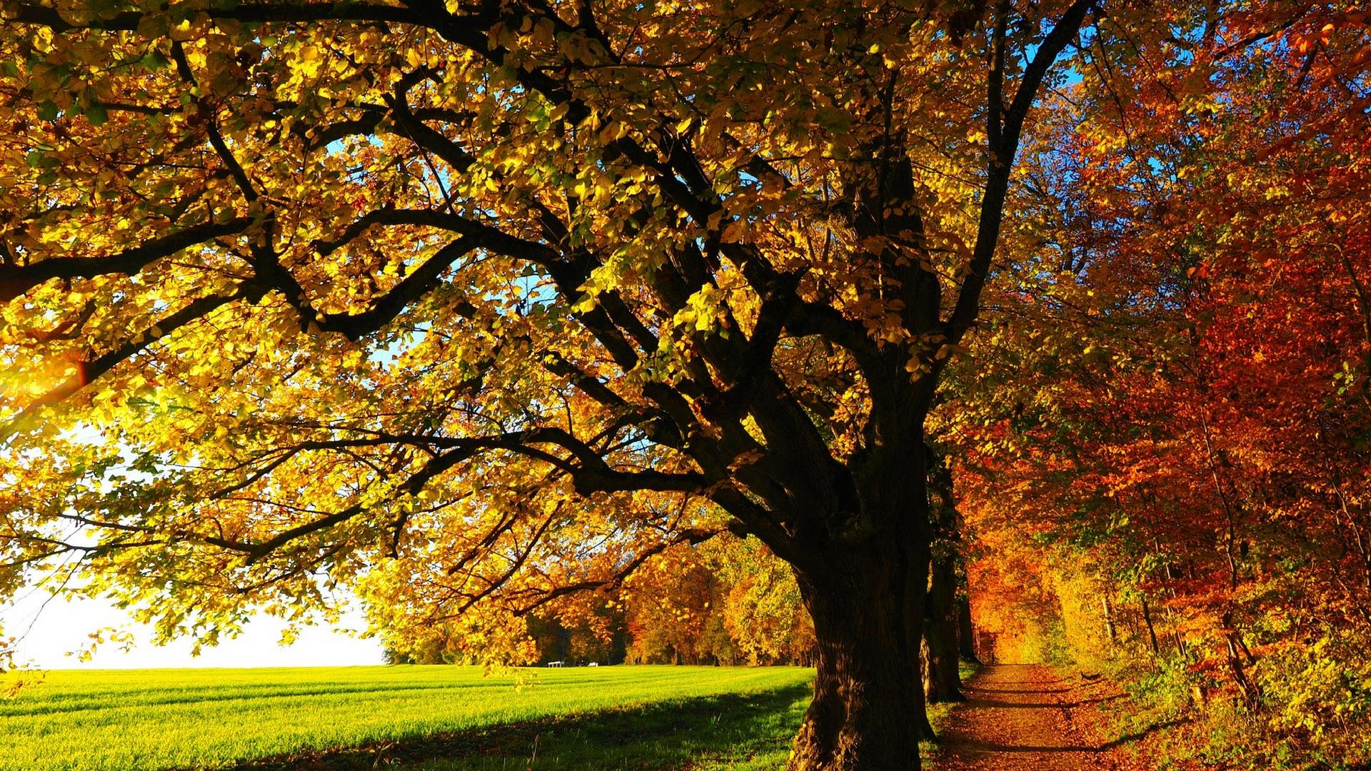 Herbst-Blues? Diese Maßnahmen sorgen für frische Energie