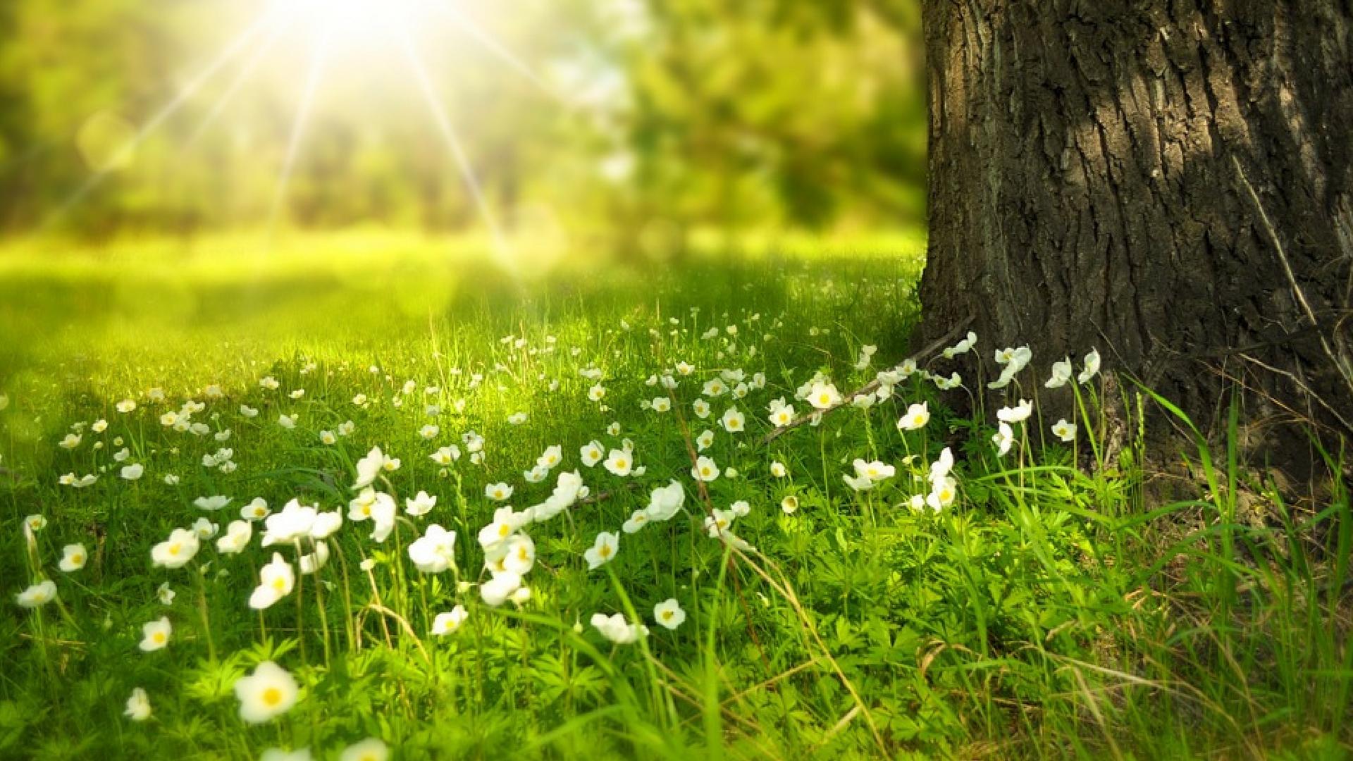 Auftanken in der Natur: Einfache Wege zu weniger Stress und mehr Wohlbefinden